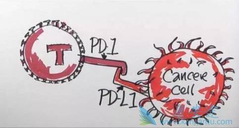 PD-1免疫